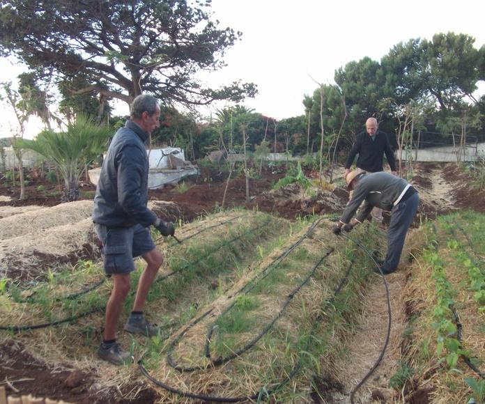 Implementando: Proyectos y Servicios de Asociación Domitila