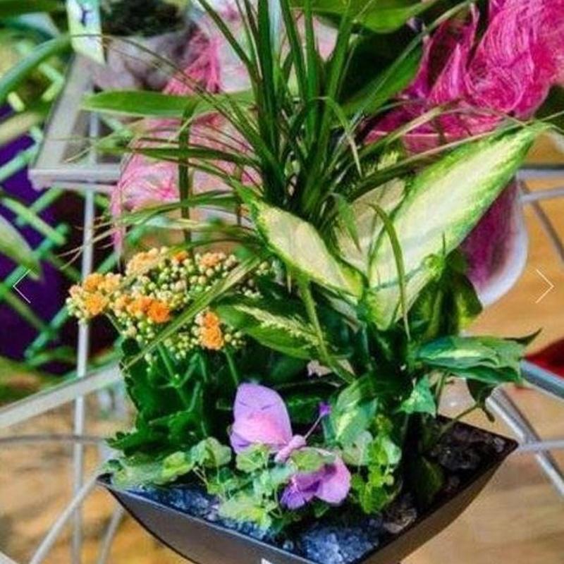 Plantas: Catálogo de FLORISTERÍA JOMACO  Tanatorio As Burgas