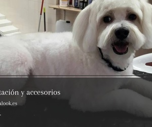 Spa canino en Santa Cruz de Tenerife | Animal Look