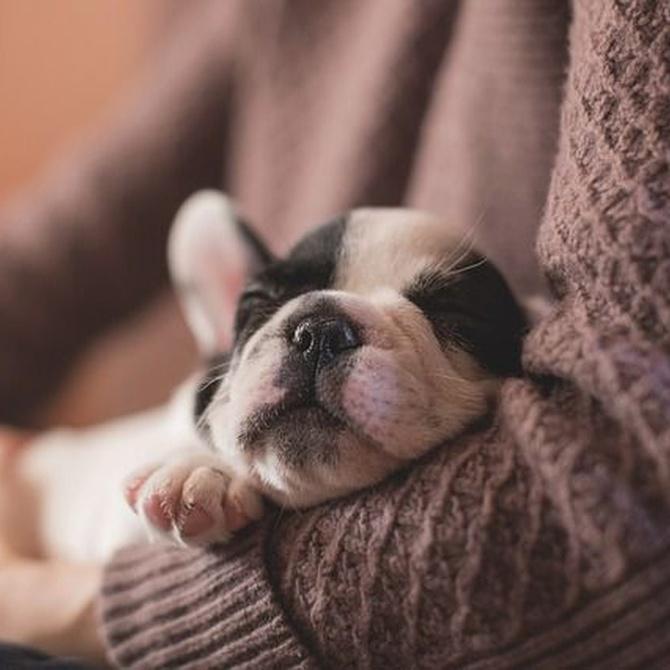 ¿Por qué tu perro olfatea a todas horas?