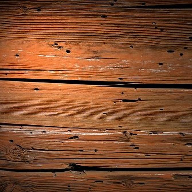 Conociendo los peligros de los xilófagos: termitas y carcoma
