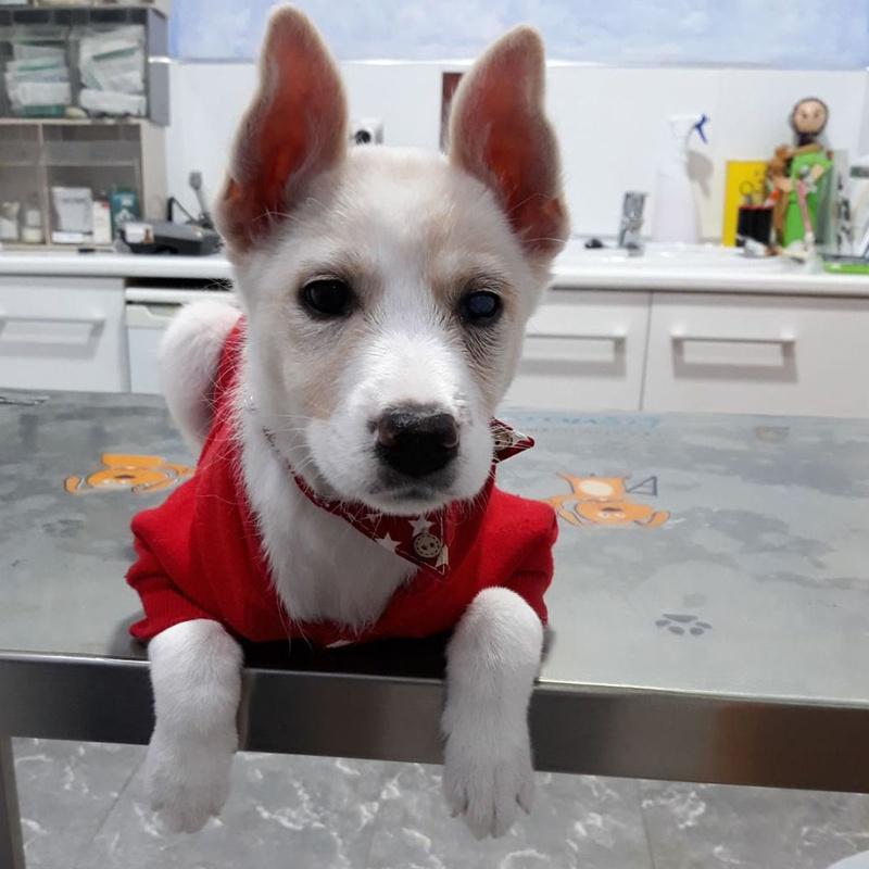 Servicios veterinarios: Servicios de Clínica Veterinaria Rocafort