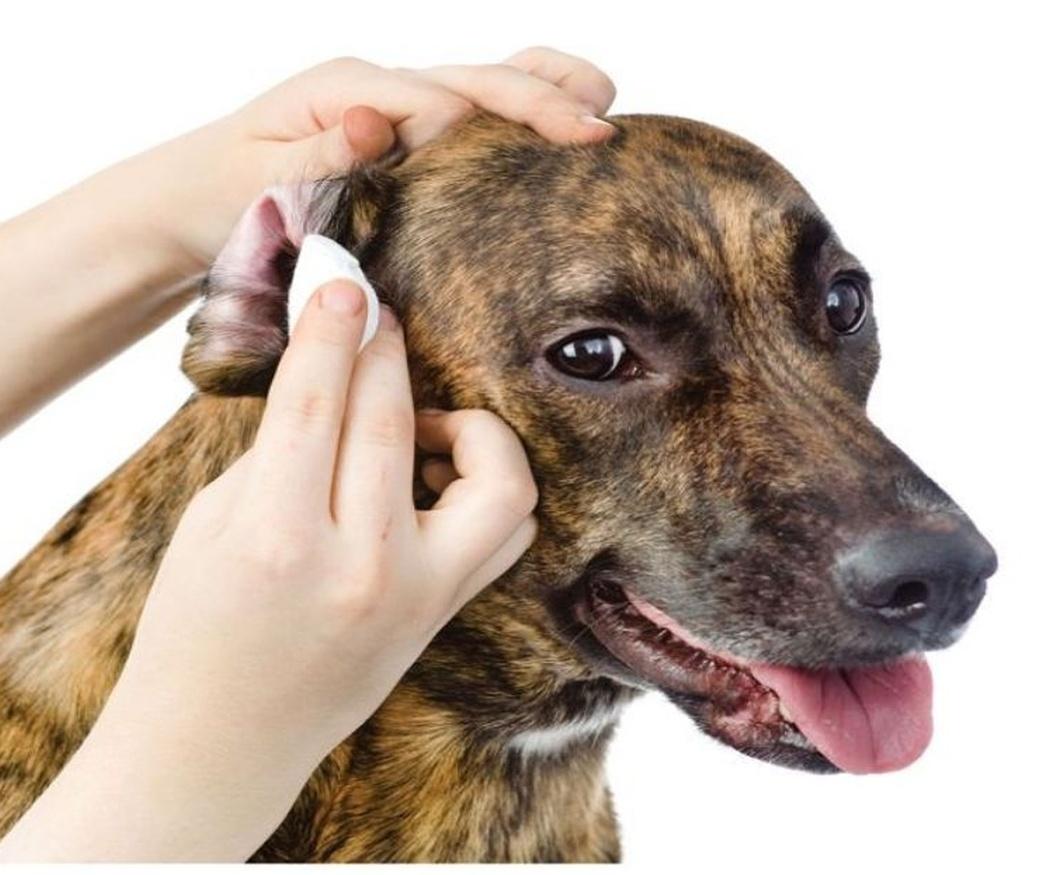 Cuida la higiene y el estrés de tu perro