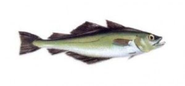 Pescados Blancos: Productos de Pescados Mariano Alonso