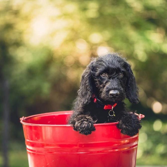 La ansiedad por separación y cómo evitarla en tu cachorro