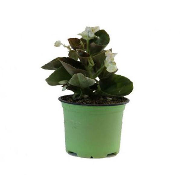 Plantas de temporada: Productos de Garden La Palma