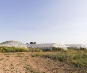 Producción de verduras ecológicas en Zaragoza