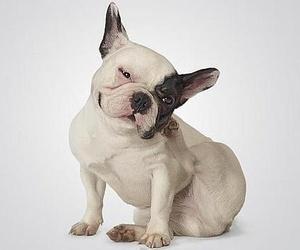 En primavera, la piel de los perros se altera