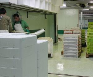Almacenaje y refrigerado de pescado en A Coruña