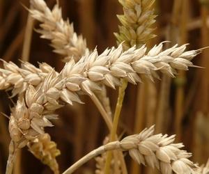 Nuevo Reglamento Europeo sobre alérgenos