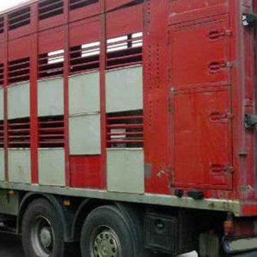 Transporte de ganado vacuno, ovino y equino