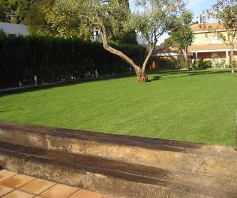 CIRUGÍA VEGETAL A PALMERAS AFECTADAS POR PICUDO ROJO : Servicios de Jardines y paisajes