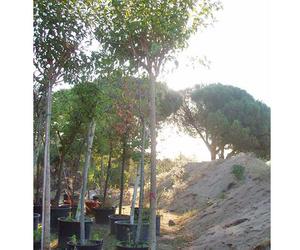 Instalación y mantenimiento de jardines en Madrid