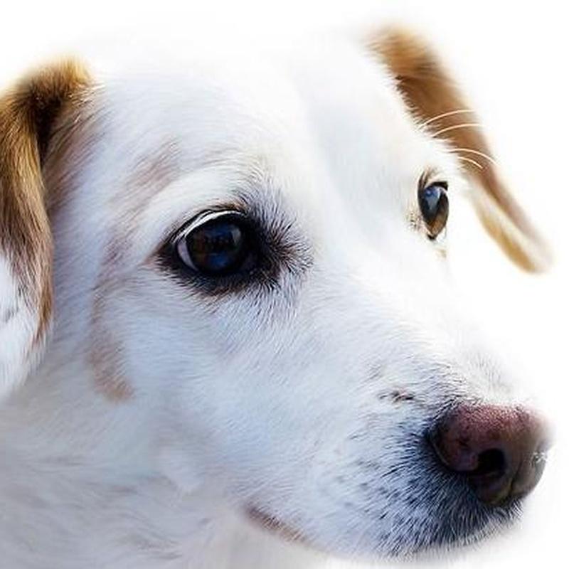 Dermatología veterinaria: Productos y Servicios de Clínica Veterinaria Manises