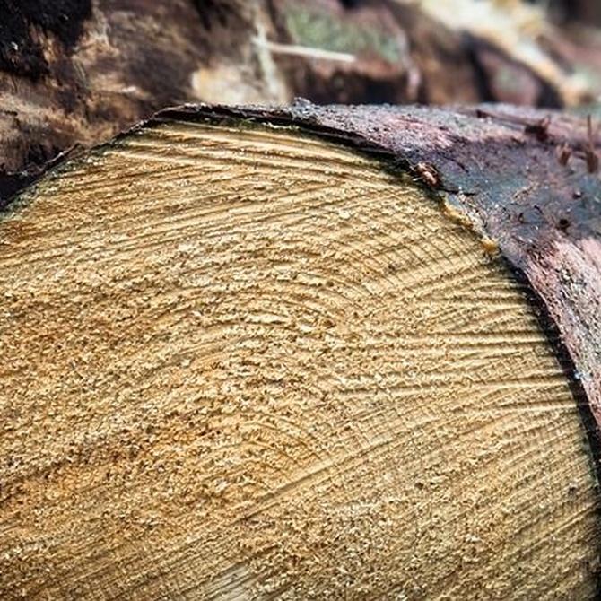 ¿Cómo elegir la madera de un mueble a medida?