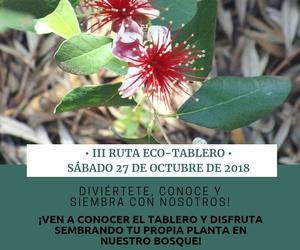 III ruta ECO-TABLERO