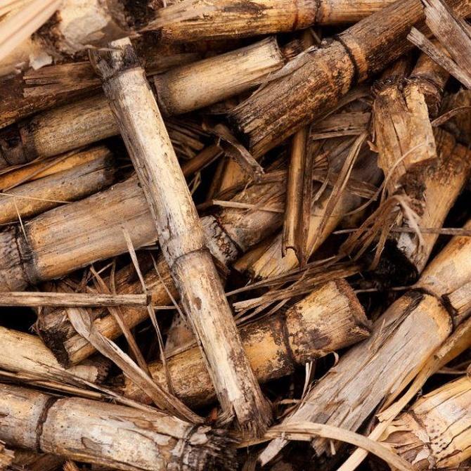 Descubre las ventajas de la biomasa