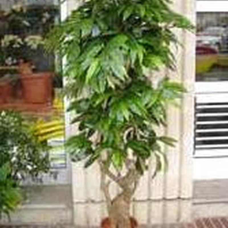 Artificial: Catálogo de Cardona Flors i Plantes