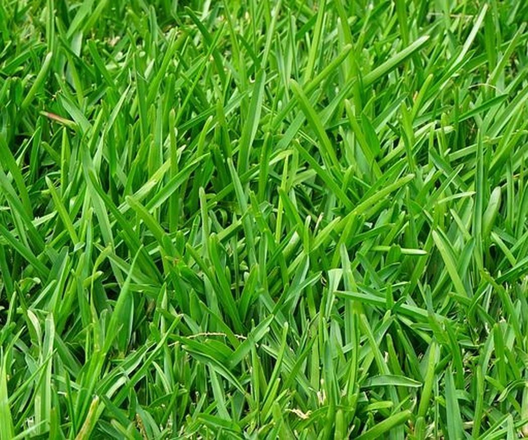La importancia del mantenimiento de tu jardín