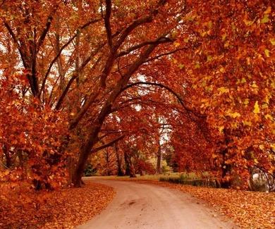 Significado del otoño