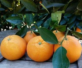 Naranjas de Mesa Grandes 10kg