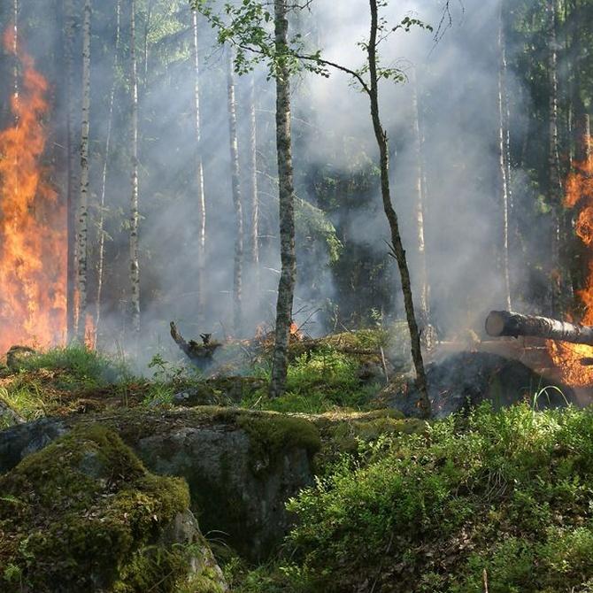 La posibilidad de instalar cámaras térmicas para prevenir incendios forestales