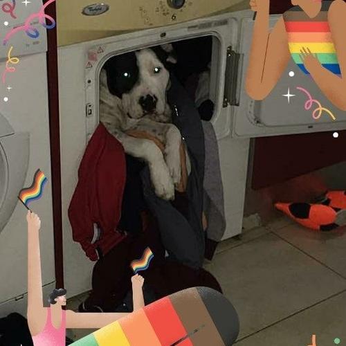 Si tenéis un cachorro y necesitáis una ayudita, no dudéis en concertar una cita con nuestro servicio de etología.