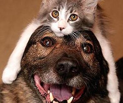 Programa de salud para mascotas senior