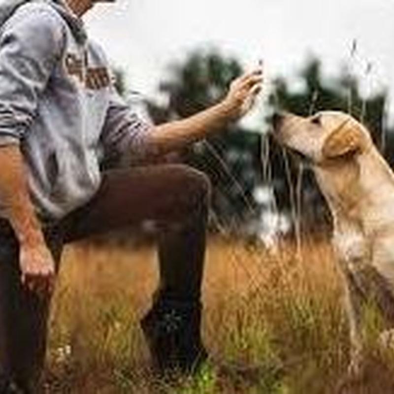 Adiestramiento y alojamiento canino: Servicios de Mascotas Dreams