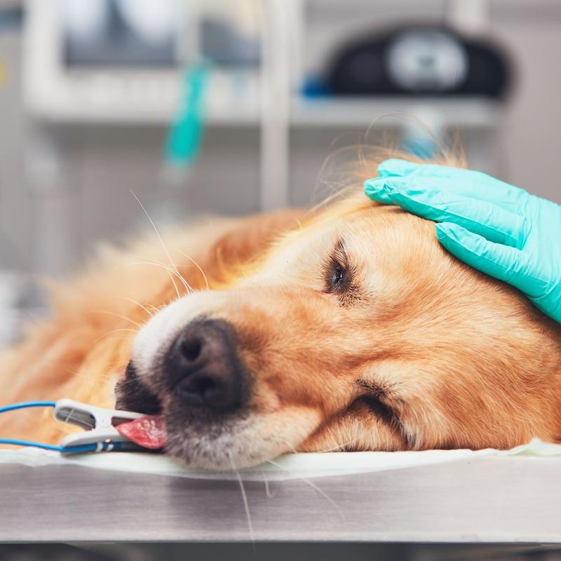 Anestesia: Servicios de Centro Veterinario Esteruelas