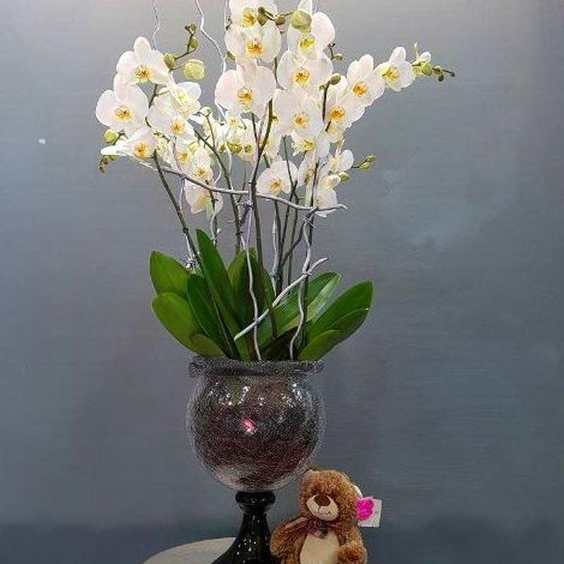 Katmandú: Productos de Flores Madrid