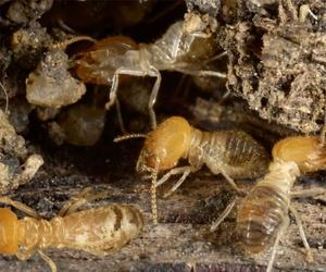 Control de plagas de termitas en Sevilla