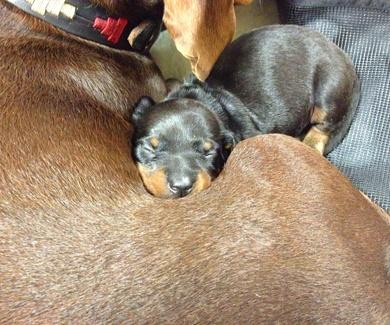 La importancia de la prevención contra la leishmaniosis canina.