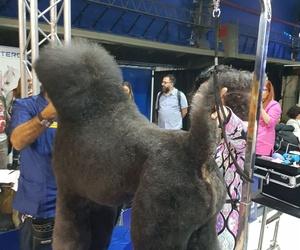 Peluquería canina, cursos personalizados