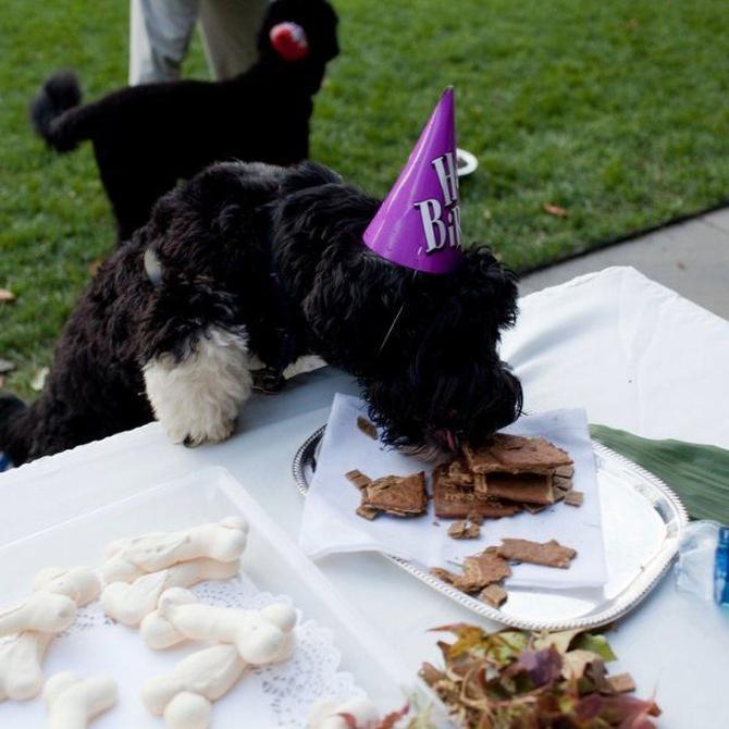 La razón por la que tu perro no debe comer chocolate