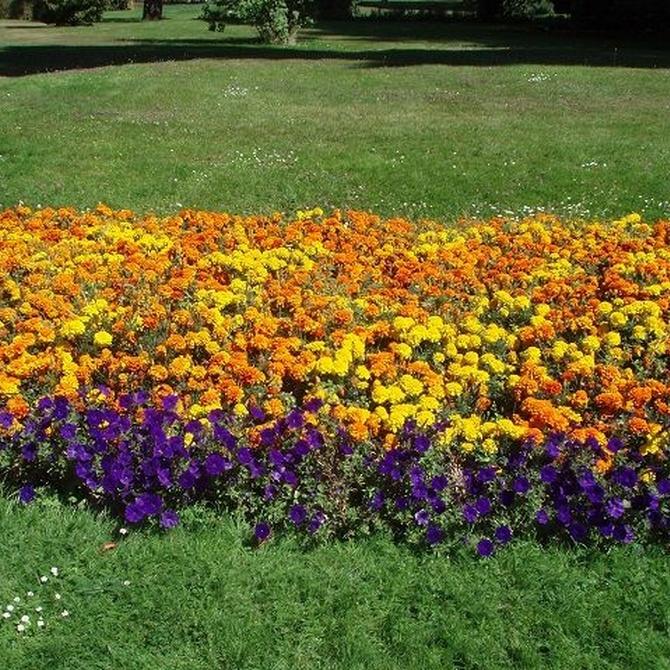 Consejos para regar las plantas durante el verano