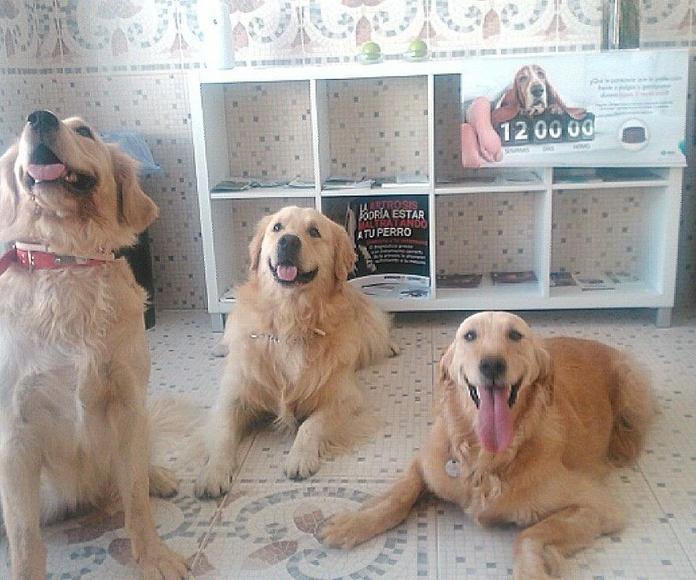 Chester y sus dos princesas!
