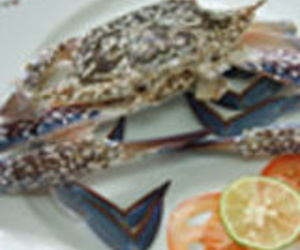 Mariscos y pescados del día