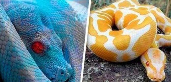 Guía de cuidados de las serpientes