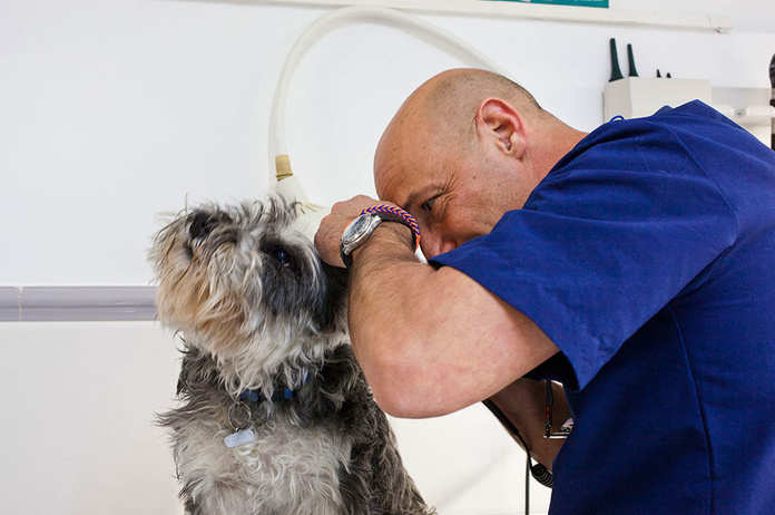 Medicina Interna: Especialidades de Hospital Veterinario Desvern }}