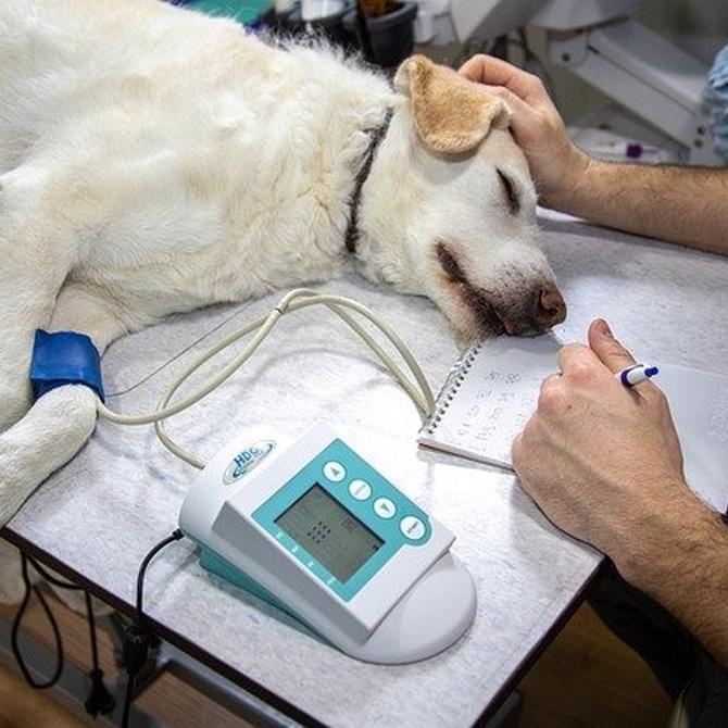 Equipamiento necesario para la cirugía general veterinaria