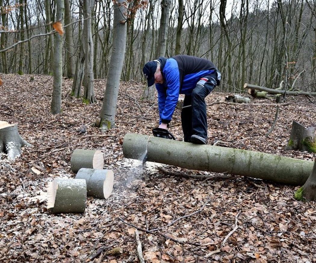 El equipo para la poda y la tala de árboles