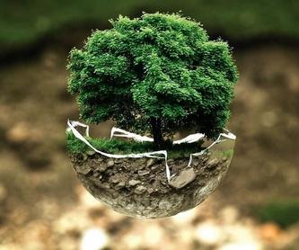 Mantenimiento de jardines: Servicios de Limpiezas Kodi