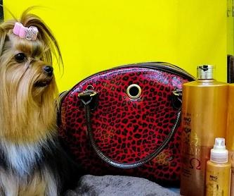 La Boutique de tu Mascota: Productos y Servicios de Amazonas 1