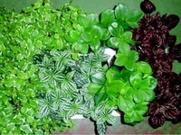Envío de flores a domicilio en Rivas Vaciamadrid a buen precio