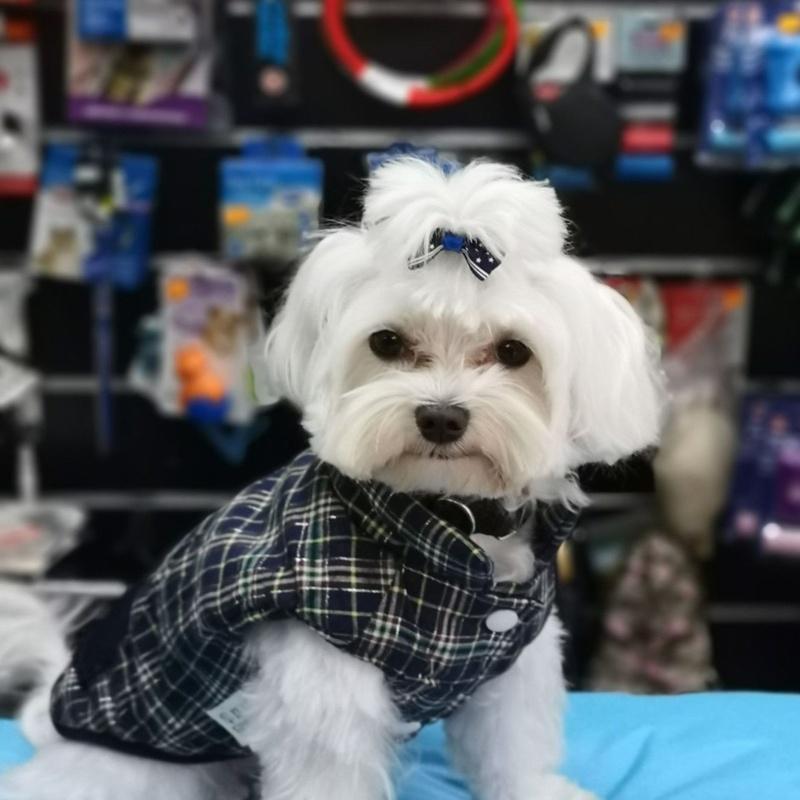 Moda canina: Servicios de VIP'S