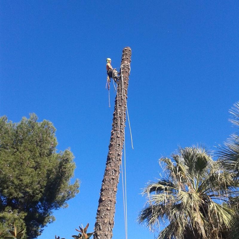 Tala de árboles y palmeras : CATÁLOGO de Tamar Gardens