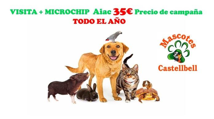 MICROCHIP AIAC a 35€ en Mascotes Castellbell