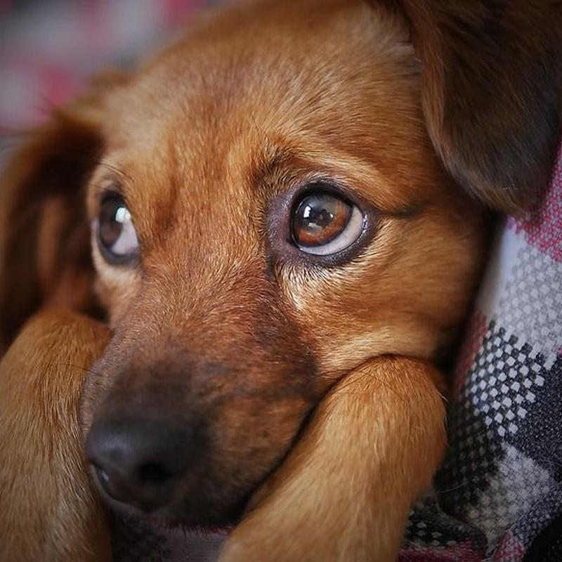 Residencia para mascotas: Servicios de Errekagane Residencia Canina