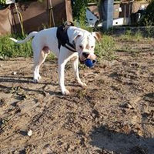 Residencia y adiestramiento canino en Tres Cantos